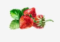 Strawberry. Watercolor, paper