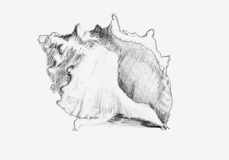 Shell. Pencil, paper