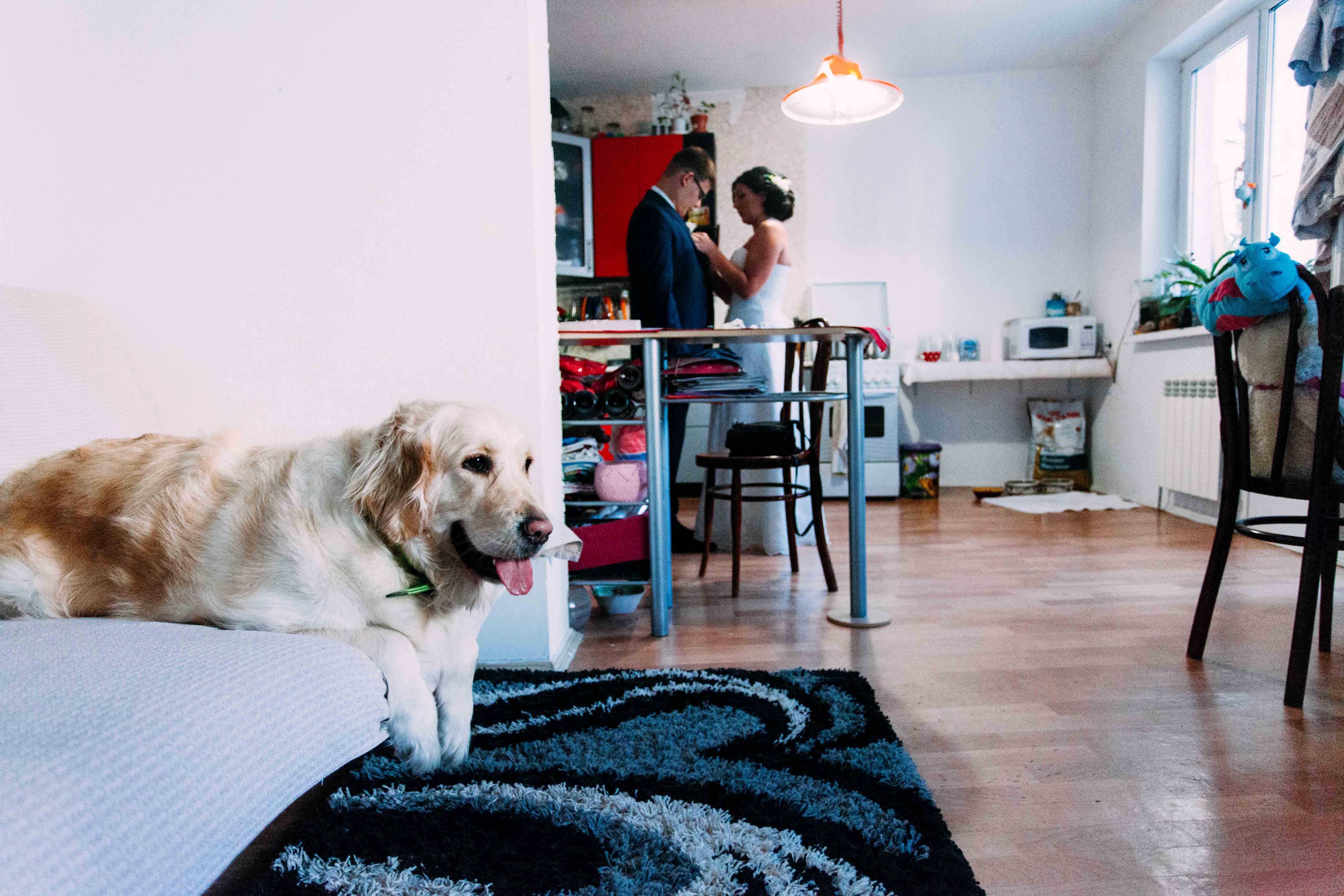 Собакак лежит на диване и грустит, потомочту его хозяева сегодня идут гулять без него