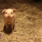 A Little Farm Tale