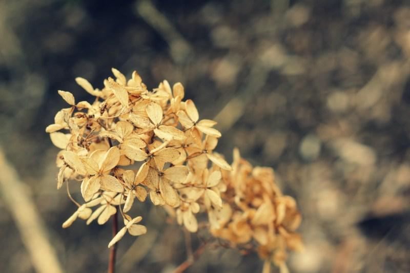 winter-flower
