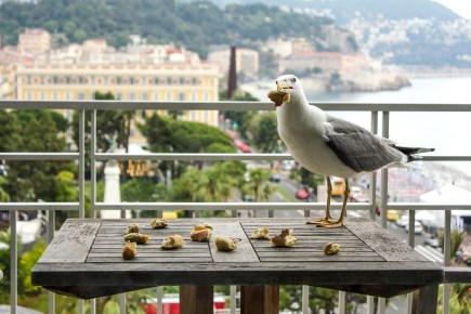 Feeding seagulls at Le Meridien
