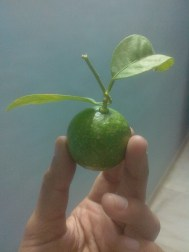 hand-lime