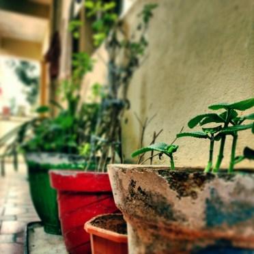 pots-flower