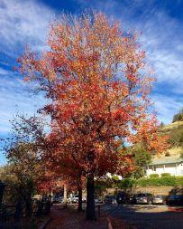 Autumn in Chico.