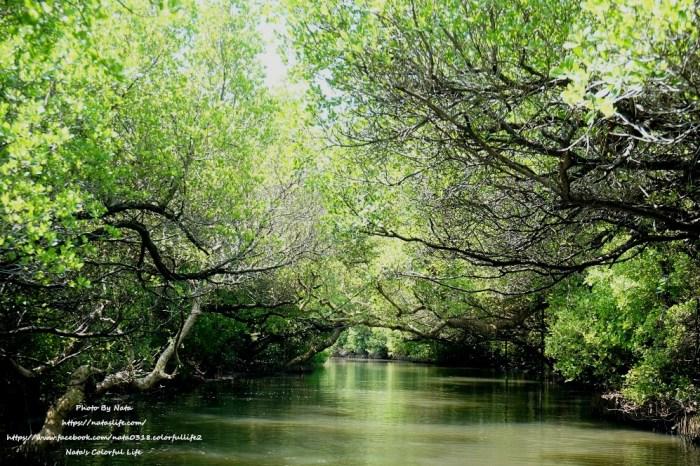 台南景點│四草綠色隧道。人生必去一次的台版亞馬遜河,很有寓教於樂的生態之旅