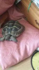 schildpadje-kussen