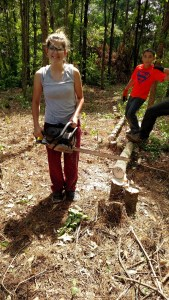 Land Clearing 4