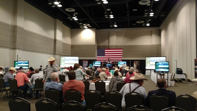 CattleAuction