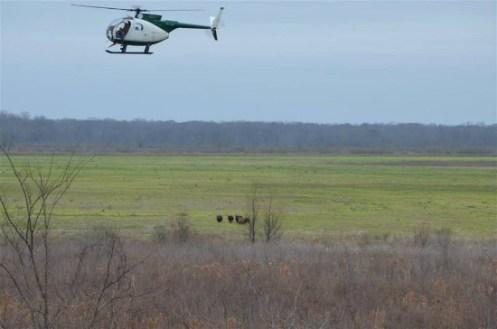 Hog Aerial Gunning