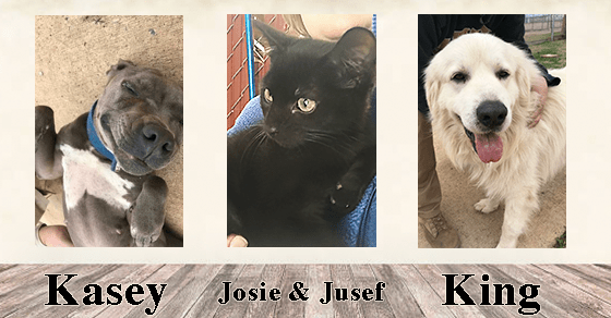 Adoptable Pets of the Week_FEB2
