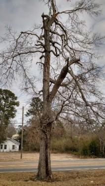 Dougs Tree 092818