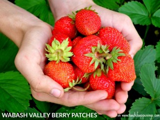 Wabash Valley Strawberry Patches and u-pick farms