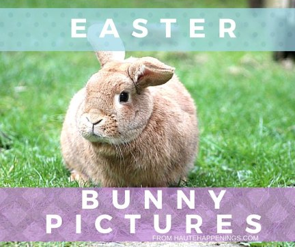 Easter bunny pictures in Terre Haute and the Wabash Valley
