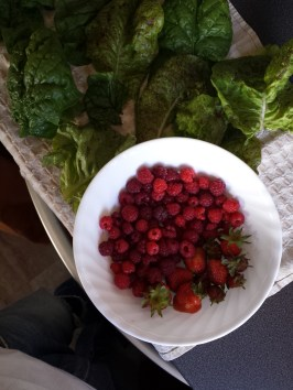 Bountiful harvest back at home.