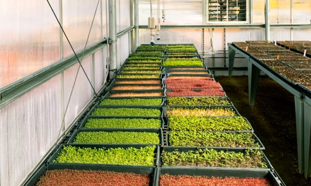 How to Start your DIY Veggie Garden from Seed