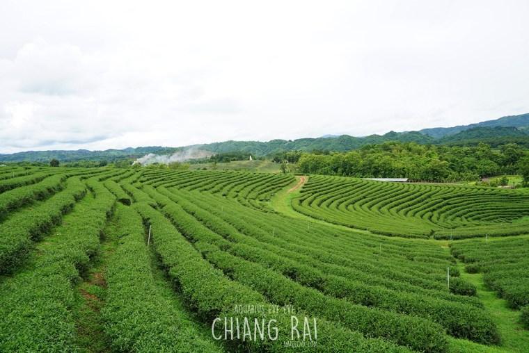 Choui Fong Tea House | Chiang Rai