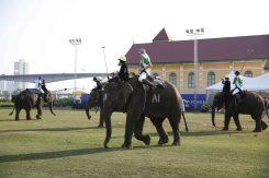 แม่โขง สนับสนุนงานแข่งขันโปโลช้างชิงถ้วยพระราชทานฯ ปี 2560