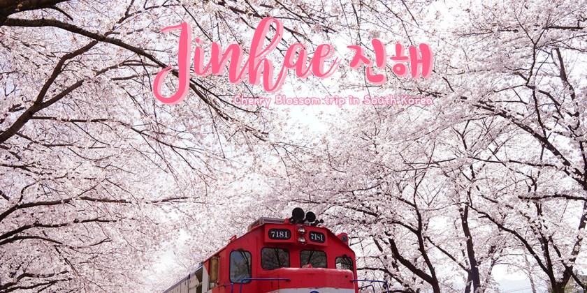 ทริปดูดอกซากุระ ณ เกาหลีใต้ ตอน 1 จินแฮ  : Cherry Blossom in South Korea Trip 2018 EP.1 Jinhae
