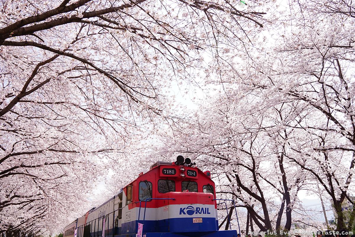 Jinhae-Cherry-Blossom-2018-Gyeonghwa-Station-01
