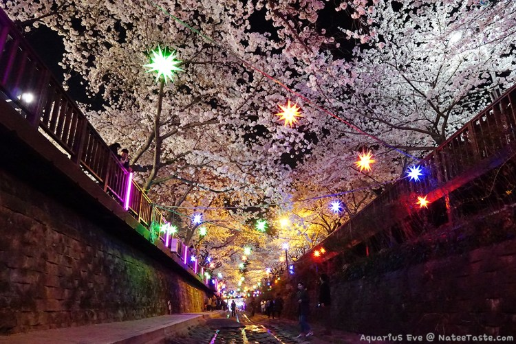 Jinhae-Cherry-Blossom-2018-Yeojwacheon-Stream-12