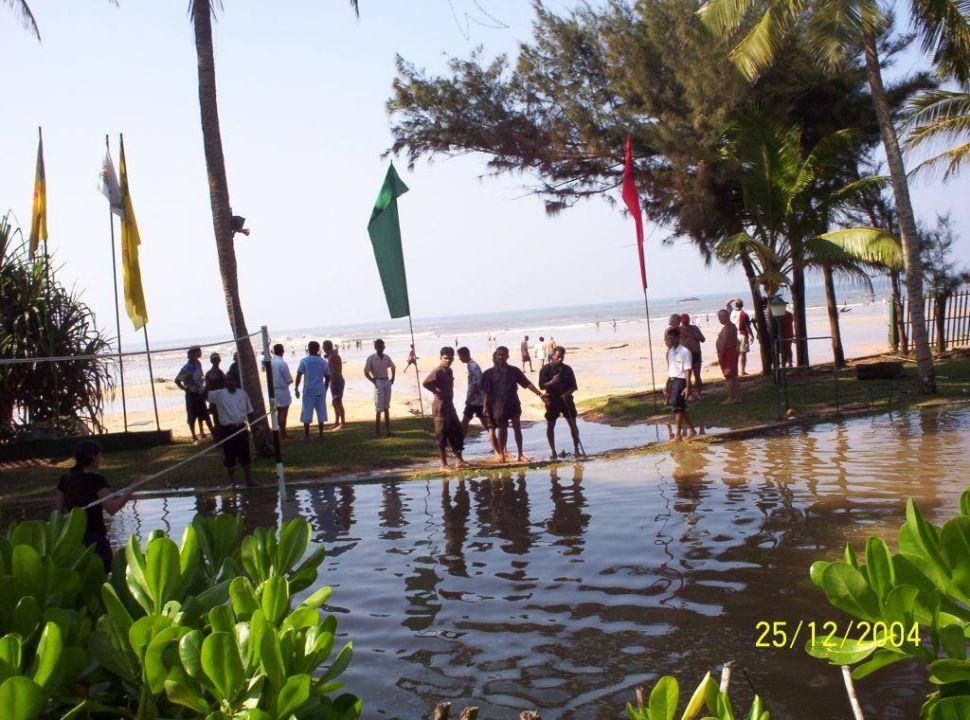 fernando bengoechea tsunami pic