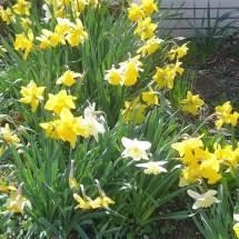 Fleurs montmirail (1)