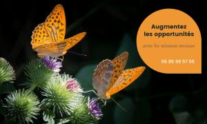 Augmentez les opportunités avec les réseaux sociaux - 0686995756 - 2 Papillons de couleur orange sur fleurs de chardon.