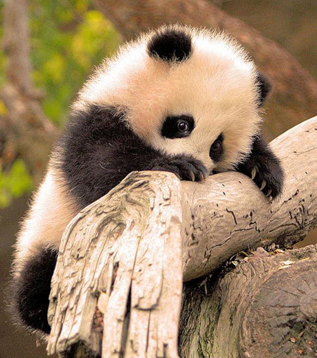 Indé Panda mag 1