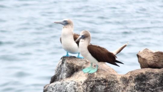 Les Galapagos…paradis à proteger