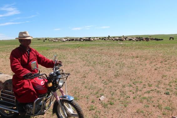 surveillance des troupeaux à moto