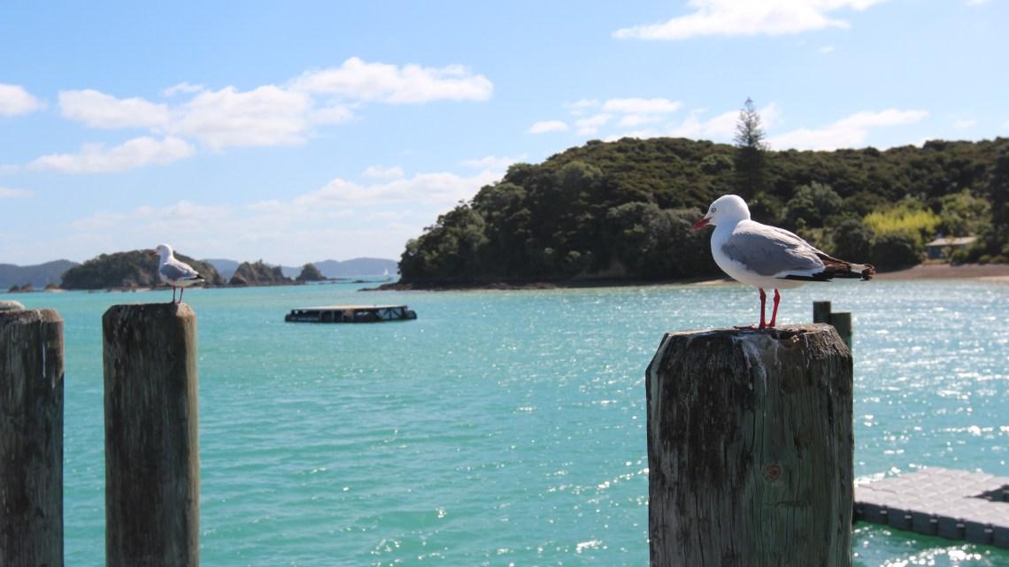 Les images de Bay Island, Nouvelle-Zélande…