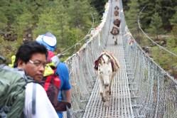 Yam sur le pont
