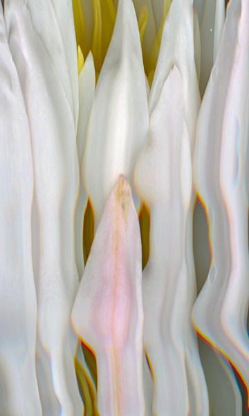 R1, 75 × 125 cm