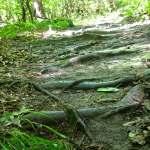 Raven Rock Trail