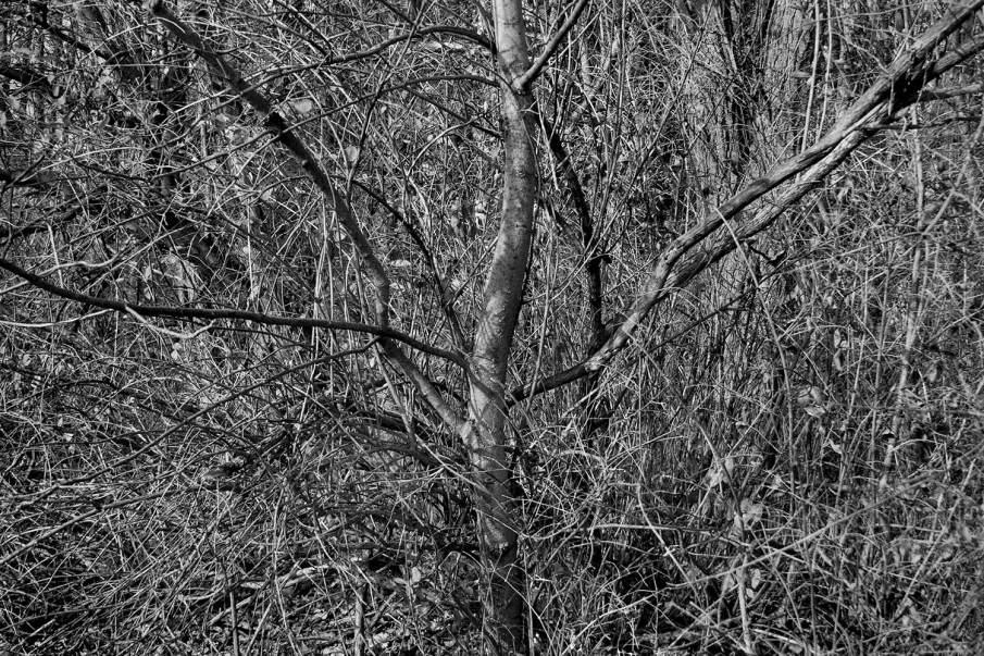 Uncentered #3, Digital Photograph