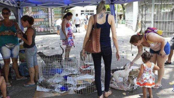 ONG leva cães e gatos para adoção a praças na Tijuca