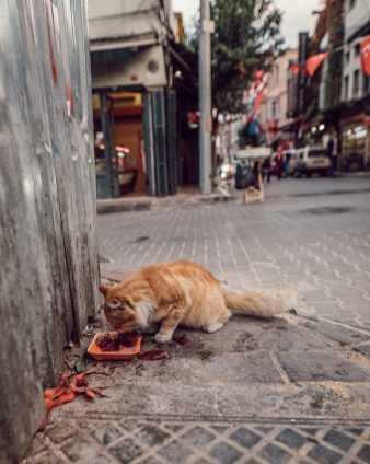 istanbul 2018 natinstablog-34