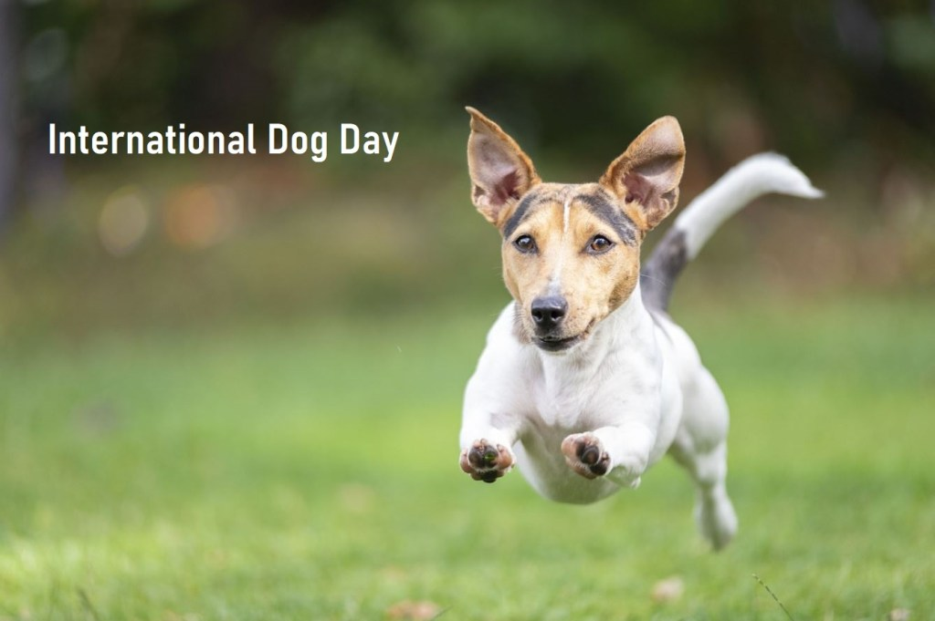 National Dog Day 2022 Poster