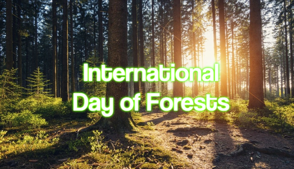 Plus, learn ways to practice sustainability all year round. International Day Of Forests 2022 When Where And Why It Is Celebrated