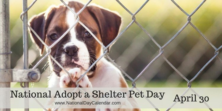 National Adopt A Shelter Pet Day April 30 National Day