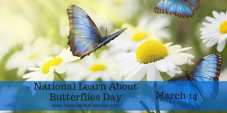 Image result for learn about butterflies day