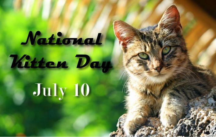 National Kitten Day Quotes