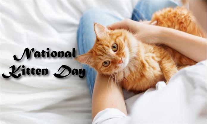 National Kitten Day pic