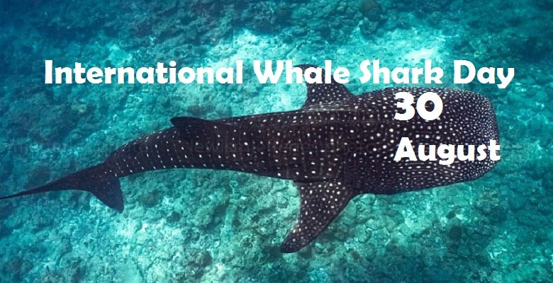 International Whale Shark Day