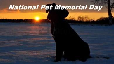 National Pet Memorial Day Photo