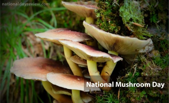 National Mushroom Day 2021