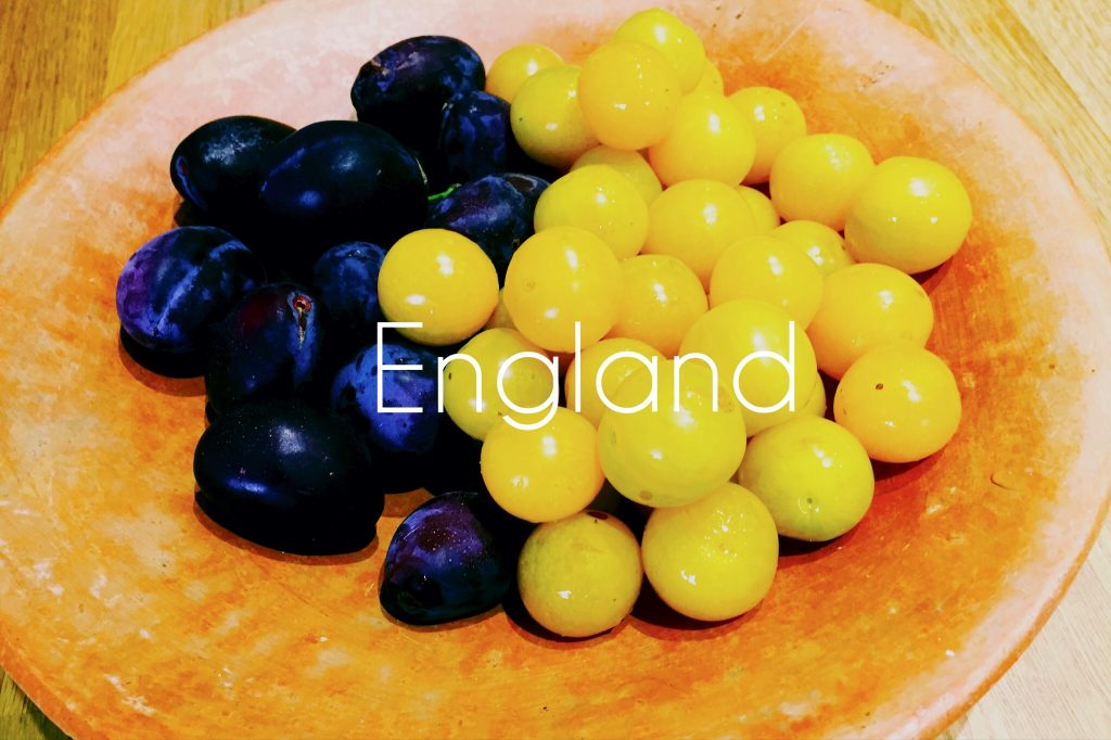 How do you make Plum Gin? National Dish of England