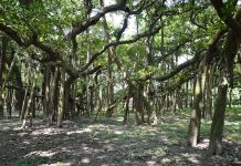 forest in rajasthan (file photo)