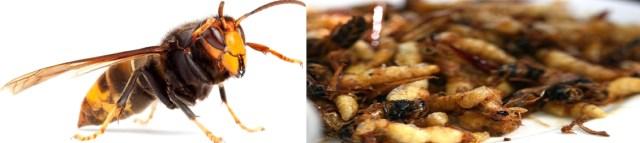 87 stir fried hornets – bhutan